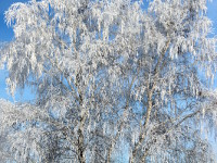Зима и солнце — скауты все вместе